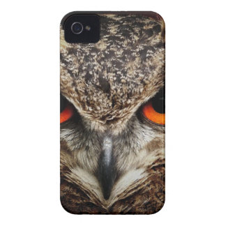 Brown and Black Owl Staring iPhone 4 Cover