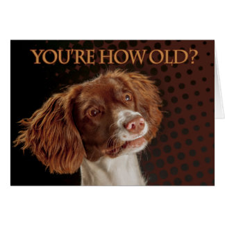 Brown And Cream Springer Spaniel, You're how old? Card