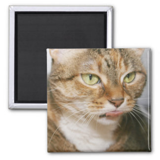BROWN AND ORANGE TABBY CAT MAGNET
