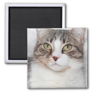 BROWN AND WHITE CAT MAGNET