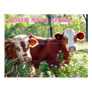 Brown and White Dairy Cows Cattle Heifers Animals Postcard