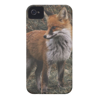 Brown and White Fox Case-Mate iPhone 4 Case