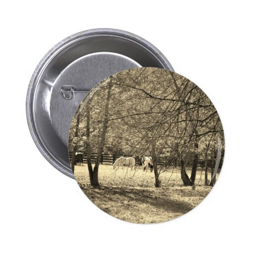 Brown  and white Horsess in tree. Sepia Tone Pins