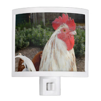 Brown_And_White_Rooster,_Night_Light Nite Light