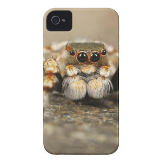 Brown and White Spider iPhone 4 Covers
