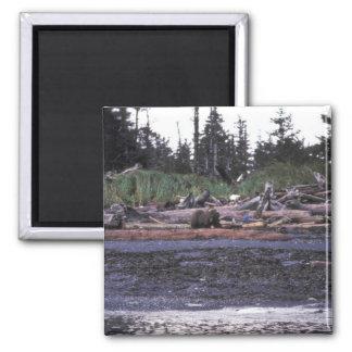 Brown Bear at Afognak Island beach Magnet
