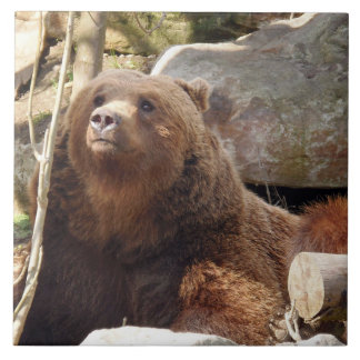 Brown bear at the zoo ceramic tile