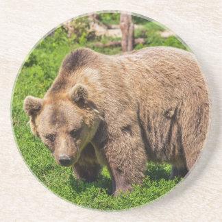 Brown bear coaster