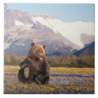 Brown bear, grizzly bear,  in riverbed with tile