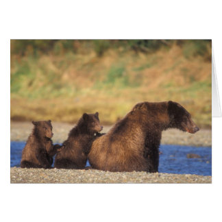 Brown bear, grizzly bear, sow with cubs, greeting card