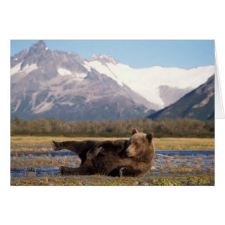 Brown bear, grizzly bear stretching on its back greeting card