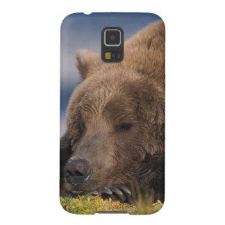 Brown bear, grizzly bear, taking a nap, Katmai Galaxy S5 Cover