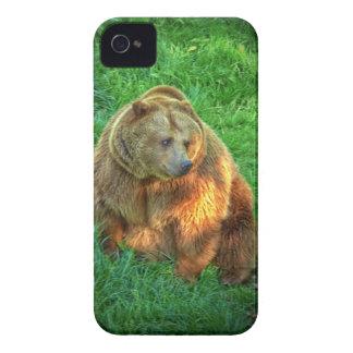 Brown bear in warm sunlight iPhone 4 case