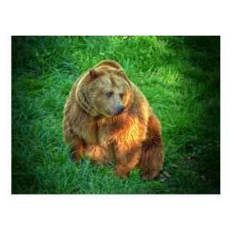 Brown bear in warm sunlight postcard