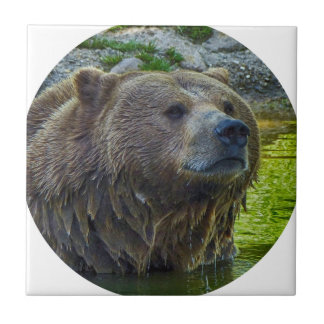 Brown bear in water 002 02.1rd tiles