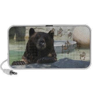 Brown bear listening to music. iPhone speakers