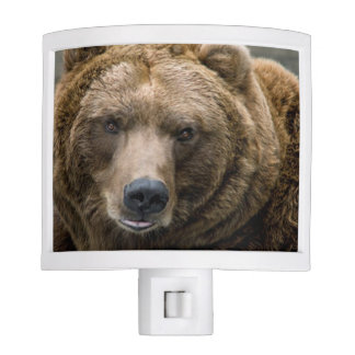 Brown Bear Night Light