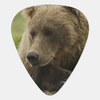 Brown bear, or Coastal Grizzly Bear, Ursus Guitar Pick