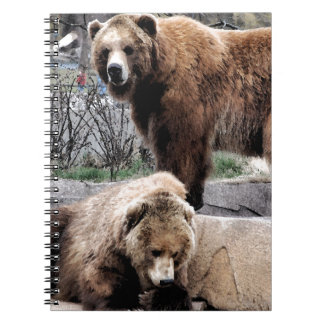 Brown bear spiral notebook