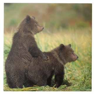 brown bear, Ursus arctos, grizzly bear, Ursus 2 Tile