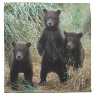 brown bear, Ursus arctos, grizzly bear, Ursus 7 2 Napkin