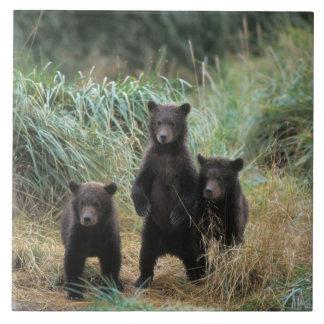brown bear, Ursus arctos, grizzly bear, Ursus 7 Tile
