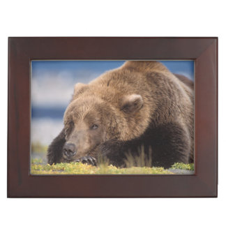 brown bear, Ursus arctos, grizzly bear, Ursus 8 Keepsake Boxes