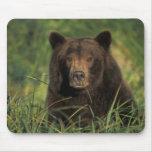 brown bear, Ursus arctos, grizzly bear, Ursus 9 Mousepads
