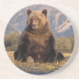 brown bear, Ursus arctos, grizzly bear, Ursus Coasters