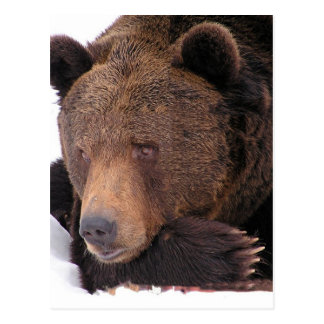 Brown Bear Winter Postcard