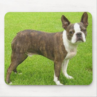 Brown Boston Terrier Standing Mousepad