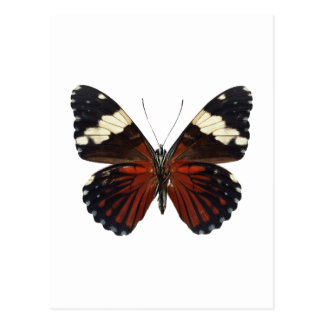Brown butterfly on any color postcard