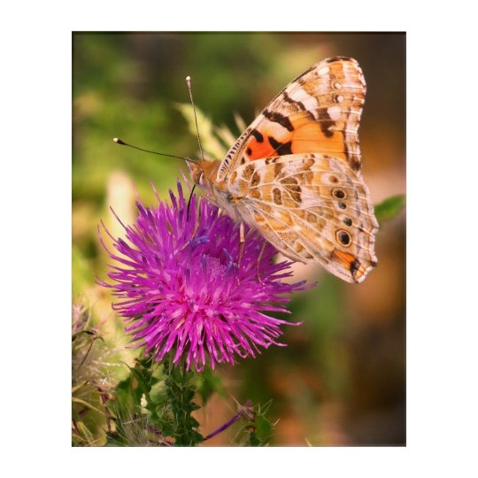 Brown Butterfly Pink  Thorn Photo Acrylic Wall Art