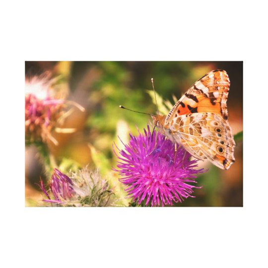 Brown Butterfly Pink  Thorn Photo Canvas Print