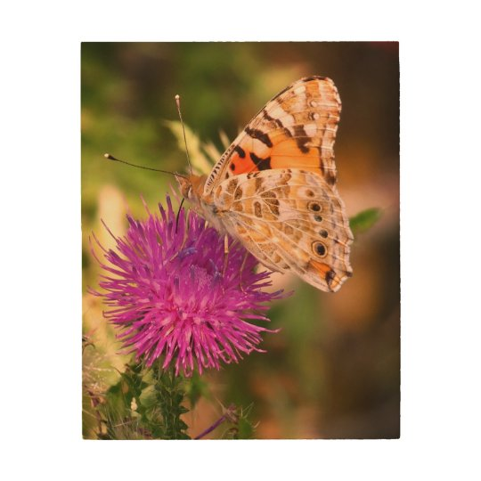 Brown Butterfly Pink  Thorn Photo Wood Wall Art