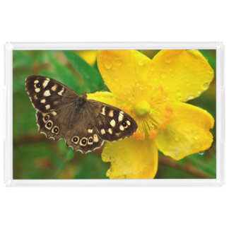 Brown Butterfly Rose of Sharon Flower Photograph Acrylic Tray