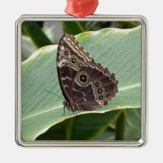 Brown Butterfly Silver-Colored Square Ornament