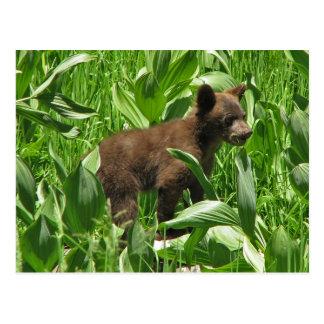 Brown Colored Black Bear Cub, Yosemite Postcard