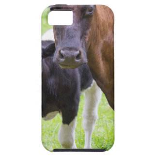 Brown cow together with black and white calf iPhone 5 case