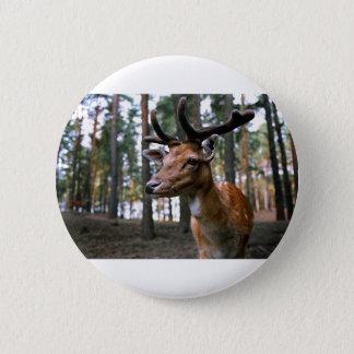 Brown Deer Near Trees 2 Inch Round Button
