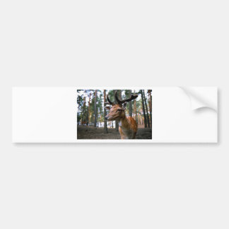 Brown Deer Near Trees Bumper Sticker