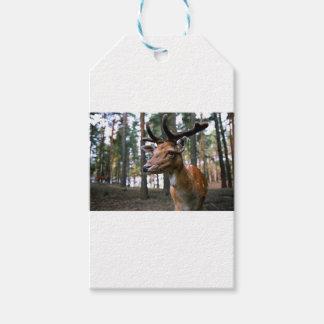 Brown Deer Near Trees Gift Tags