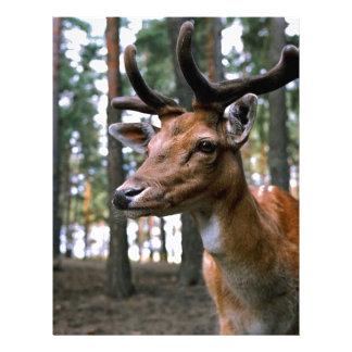 Brown Deer Near Trees Letterhead