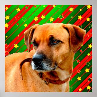 Brown Dog stars Red Yellow Green Christmas Poster