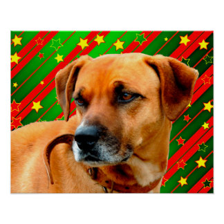 Brown Dog stars Red Yellow Green Christmas Poster