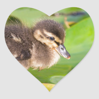 Brown duckling walking on water lily leaves heart sticker