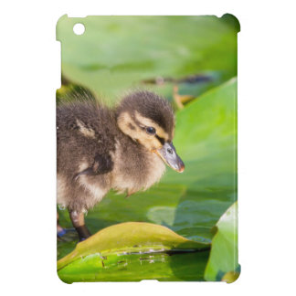 Brown duckling walking on water lily leaves iPad mini cases