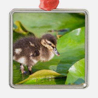 Brown duckling walking on water lily leaves metal ornament
