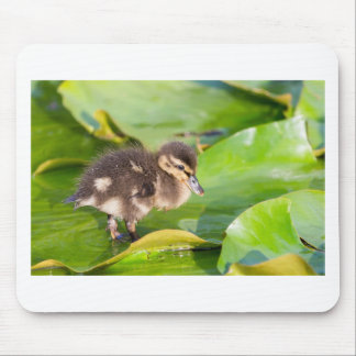 Brown duckling walking on water lily leaves mouse pad