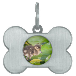 Brown duckling walking on water lily leaves pet ID tag